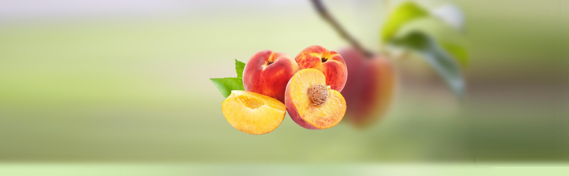 植物营养学